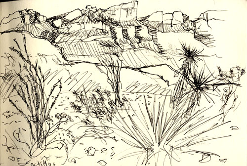 Big Bend cacti sketch