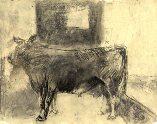 sketch of bull at animal auction