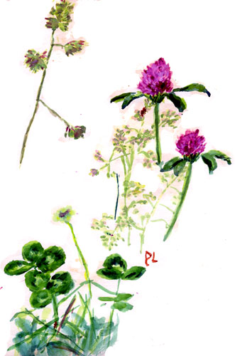 watercolour sketch of clover & grasses, 1978