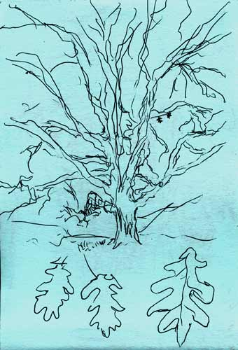 tree drawing of Dickinson tree, Amherst