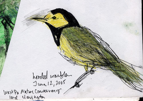 hooded warbler, Clarington, PA, sketch